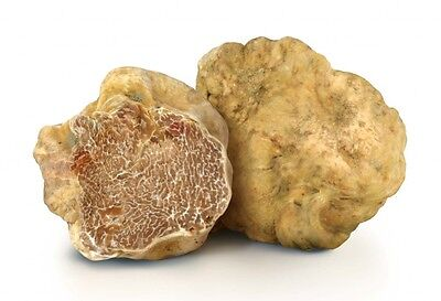 20 g WHITE TRUFFLE Seeds Tuber magnatum Spawn Mushroom Mycelium Spores + eBook