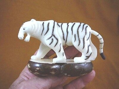 (TNE-TIG-239-A) large White Bengal TIGER TAGUA NUT Figurine carving love tigers