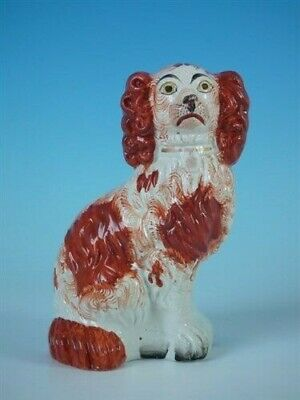 Staffordshire No.6 russet & white spaniel