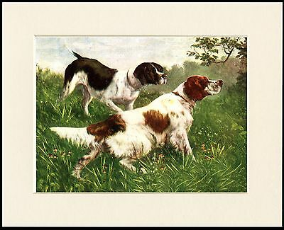 Irish Red And White Setter And Pointer Dogs Dog Print Mounted Ready To Frame
