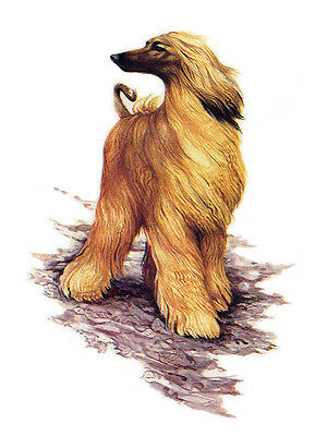 Afghan Hound Charming Dog Greetings Note Card Beautiful Standing Dog