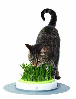 Catit Senses Grass Garden Cat Activity Play Kitten Toy Treat