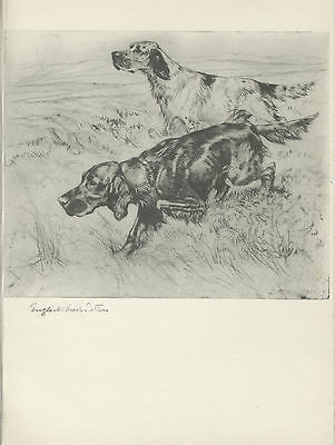 IRISH AND ENGLISH SETTER DOGS LOVELY OLD 1938 DOG ART PRINT by VERNON STOKES