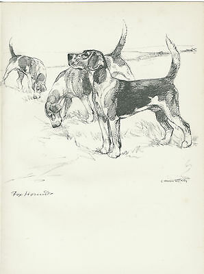 FOXHOUNDS LOVELY OLD 1938 DOG ART PRINT by VERNON STOKES