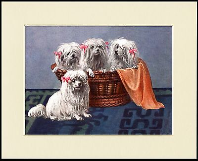 Maltese Four Little Dogs Charming Dog Print Mounted Ready To Frame