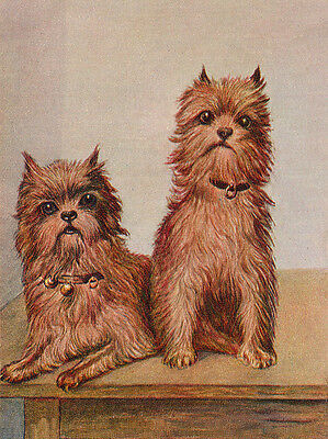 Brussels Griffon Charming Dog Greetings Note Card Two Beautiful Sitting Dogs