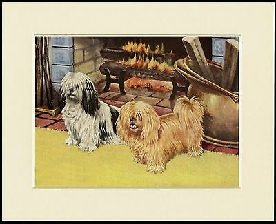 Lhasa Apso Dogs By The Fire Lovely Dog Print Mounted Ready To Frame