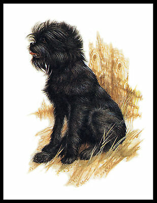 Affenpinscher Seated Dog Lovely Dog Print Poster