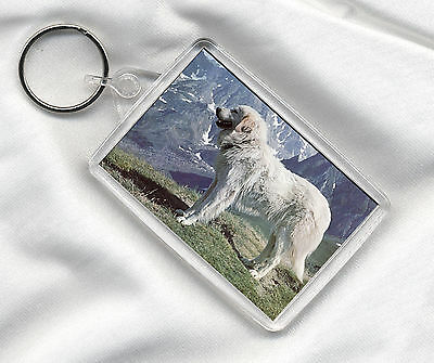 Key Ring With Lovely Pyrenean Mountain  Dog Print Image Insert Great Gift