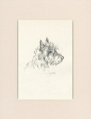 CAIRN TERRIER HEAD STUDY LOVELY 1946 DOG PRINT by MAC LUCY DAWSON READY MOUNTED