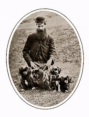 Tibetan Spaniel Charming Dog Greetings Note Card Edwardian Man And His Dogs