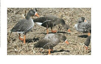 Real Geese Pro Series Specklebelly Goose Silhouette Waterfowl Hunting Decoys