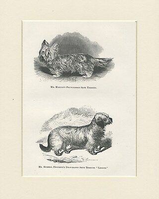 Skye Terrier Dogs Antique 1878 Named Dogs Dog Print Engraving Ready Mounted