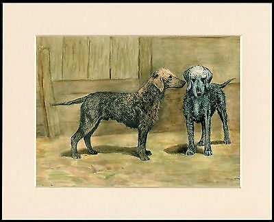 Bedlington Terrier Two Old Style Dogs Great Dog Print Mounted Ready To Frame