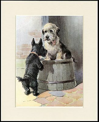 Scottish And Dandie Dinmont Terrier Dogs Lovely Dog Print Mounted Ready To Frame