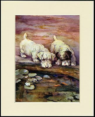 Sealyham Terrier Two Dogs By A Pond Lovely Dog Print Mounted Ready To Frame