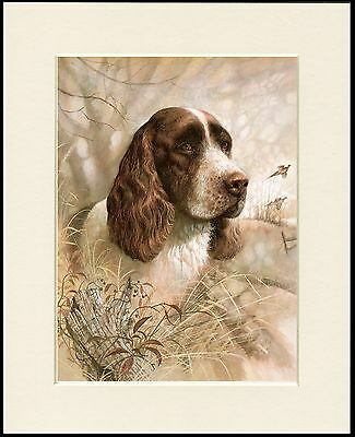 English Springer Spaniel Great Dog Head Study Print Mounted Ready To Frame