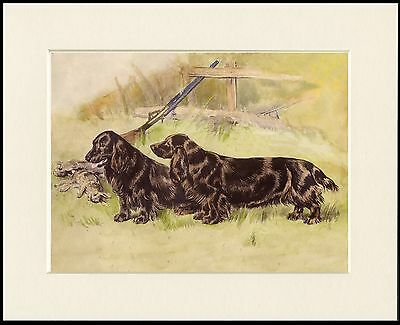 Field Spaniel Two Old Style Dogs Dog Print Mounted Ready To Frame