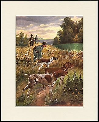 German Shorthaired Pointer Shooting Scene Dog Print Mounted Ready To Frame #2