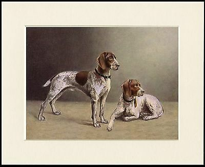 German Shorthaired Pointer Two Dogs Lovely Dog Print Mounted Ready To Frame