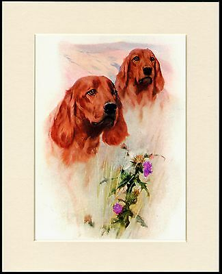 Irish Setter Dog Print Head Study Two Dogs Mounted Ready To Frame