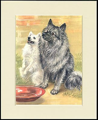 Keeshond And Spitz Lovely Dog Print Mounted Ready To Frame