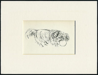 PEKINGESE AND BALL VINTAGE 1930'S DOG SKETCH PRINT by KF BARKER READY MOUNTED