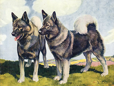 Norwegian Elkhound Dogs Old Dog Colour Art Print Page By Nina Scott Langley