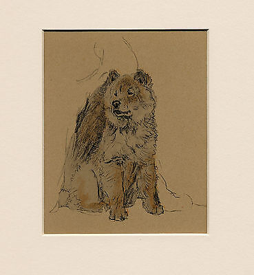 Chow Chow Lovely 1930's Cecil Aldin Dog Art Print Ready Mounted