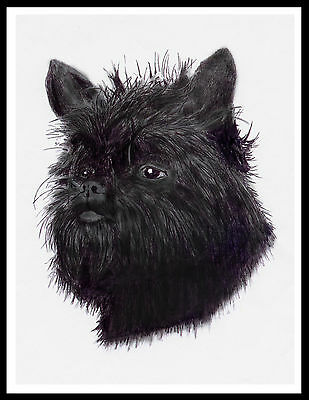 Affenpinscher Lovely Head Study Dog Print Poster