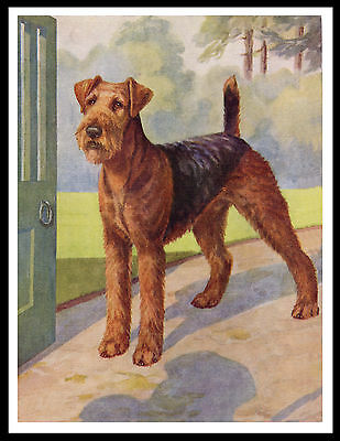 Airedale Terrier At Door Great Vintage Style Dog Print Poster