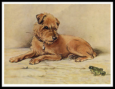 Border Terrier And Frog Lovely Vintage Style Dog Print Poster
