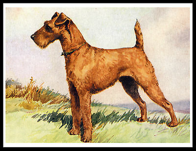 Irish Terrier Lovely Image Vintage Style Dog Print Poster