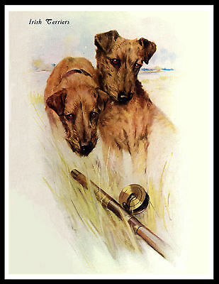 Irish Terrier Lovely Vintage Style Dog Print Poster
