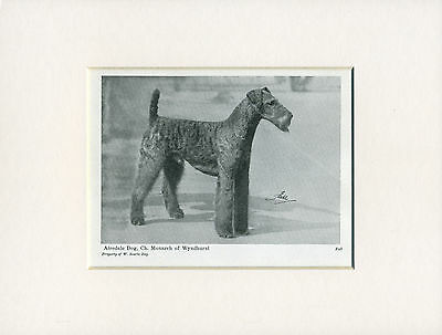 Airedale Terrier Old Named Dog Print From 1948 Ready Mounted