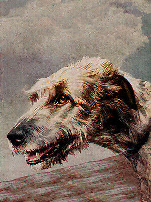 Irish Wolfhound Charming Dog Greetings Note Card Beautiful Head Study