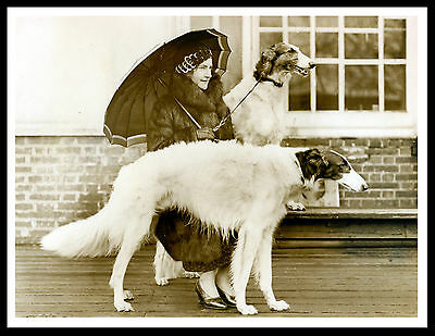 Borzoi Lady And Dogs Lovely Vintage Style Dog Print Poster