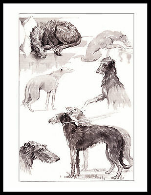 Scottish Deerhound Charming Images Of Dogs Lovely Vintage Style Dog Print Poster