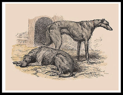 Scottish Deerhound Two Dogs Lovely Vintage Style Dog Print Poster