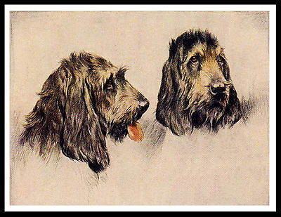 Otterhound Two Dogs Head Study Great Image Vintage Style Dog Print Poster
