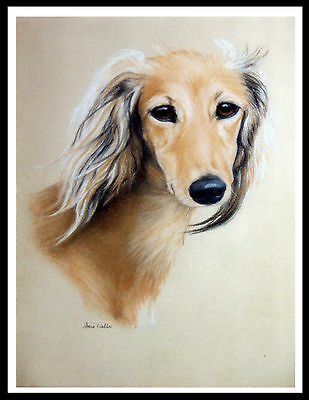 Saluki Lovely Image  Head Study  Dog Print Poster