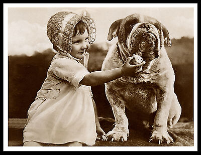 English Bulldog Little Girl Feeding Dog Charming Vintage Style Print Poster