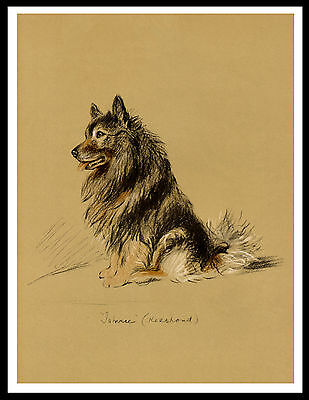 Keeshond Seated Dog Lovely Vintage Style Dog Print Poster