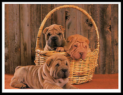 Shar Pei Puppies Charming Dog Print Poster
