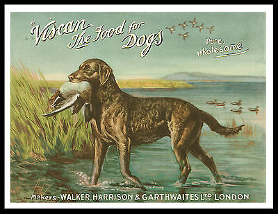 Chesapeake Bay Retriever And Duck Great Vintage Style Dog Advert Print Poster