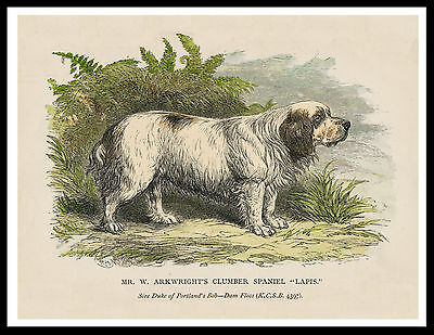 Clumber Spaniel Named Dog Great Vintage Style Dog Print Poster