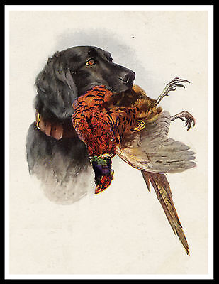 Flat Coated Retriever And Pheasant Head Study Vintage Style Dog Print Poster