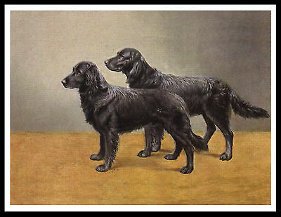 Flat Coated Retriever Two Old Style Dogs Great Vintage Style Dog Print Poster