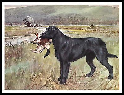 Flat Coated Retriever With Duck Marshland Scene Vintage Style Dog Print Poster