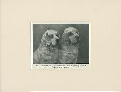 CLUMBER SPANIEL NAMED DOGS OLD 1940's DOG PRINT MOUNTED READY TO FRAME